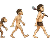 Evolution-cartoon_opt