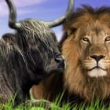 Lvi a Bible (video)